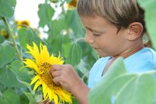 Free Child With Sunflower Outdoor Stock Photos - 21101033