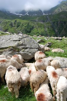 Free Sheeps Close To The Mountains Royalty Free Stock Photography - 21102037