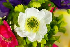 Free White Flowers, Close Up Shot Stock Photography - 21103352