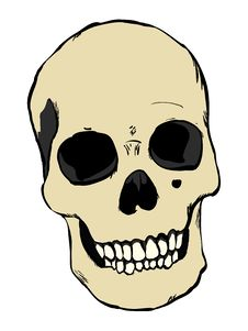 Free Human Skull Royalty Free Stock Photo - 21103355