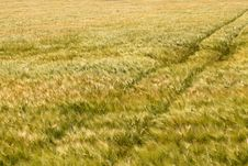 Free Agriculture Royalty Free Stock Photo - 21104195