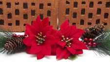 Free Poinsettia With Pine Cone Stock Photography - 21104652