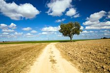 Free Road In The Field Stock Photo - 21104900