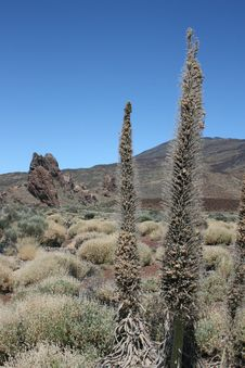 Free Tenerife - Teide Royalty Free Stock Image - 21105066