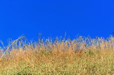 Free Yellow Grass With Blue Sky Stock Image - 21105621