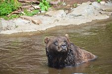 Free Grizzley Bear Playing In Water Stock Photography - 21105902