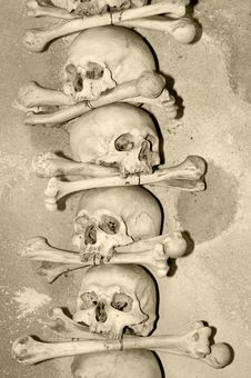 Human Skulls Royalty Free Stock Photography
