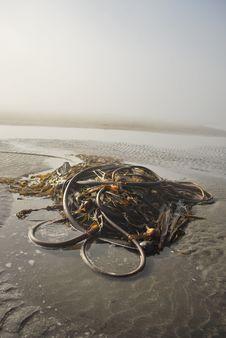 Free Foggy West Coast Beach & Kelp Stock Image - 21106761