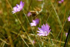 Free Purple Wildflowers Royalty Free Stock Photos - 21107358