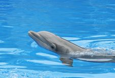 Free Dolphin Stock Image - 21107541