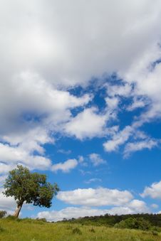 Free Tree Sky And Clouds Royalty Free Stock Photos - 21108248
