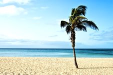 Free Beach With Palm Trees Stock Image - 21108561