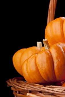 Free Pumpkins Stock Photo - 21109920