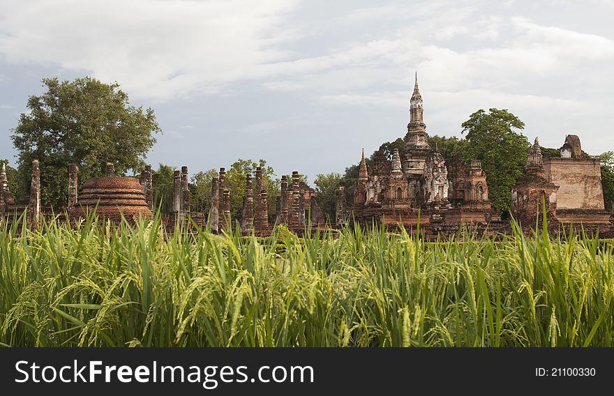 The rice and pagoda