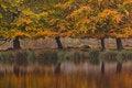 Free Autumn Birch Trees Royalty Free Stock Image - 21111076