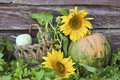 Free Pumpkin And Sunflowers Royalty Free Stock Photos - 21112428