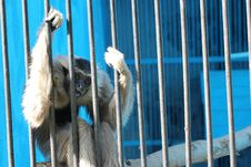 Free Sad Monkey Sit In Cage Stock Photography - 21110412