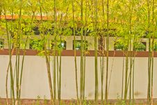 Free Bamboo Around The House Royalty Free Stock Image - 21110416