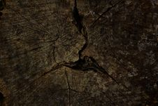 Free Old Tree Stump Background Stock Photography - 21110472