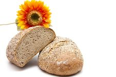 Free More Grain Bread With Sunflower Royalty Free Stock Images - 21110999