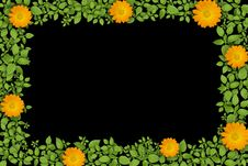 Free Green Plant Frame With Flowers Royalty Free Stock Photo - 21111185