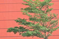 Free Red Architecture Background And Green Plant Royalty Free Stock Images - 21111239