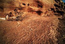 Free Heat - Drought Tree And Dry Rocks Stock Photo - 21112190