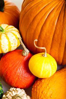 Free Ripe Pumpkin Fruits Isolated Royalty Free Stock Photo - 21113365