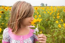 Free Smelling Sunflower Royalty Free Stock Photo - 21113545