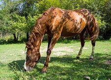 Free Horse Stock Photo - 21114500