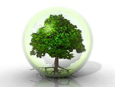 Free Tree In A Bubble Royalty Free Stock Images - 21114889