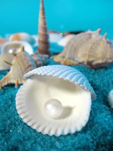Free Shells Royalty Free Stock Images - 21115589