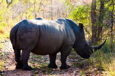 Free Big Rhino In Africa Royalty Free Stock Photography - 21115947