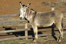 Free Portrait Of A Donkey Adult Royalty Free Stock Images - 21115969