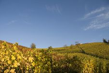 Free Vineyard Landscape In Autumn Stock Images - 21116134