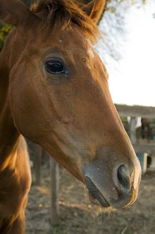 Baby Horse Royalty Free Stock Images