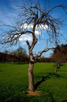 Free Single Tree Stock Photos - 21116723