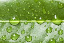 Free Water Drops On Leaf Royalty Free Stock Photos - 21116988