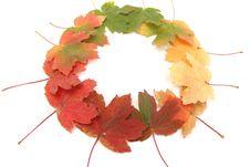 Free Autumn Changes Royalty Free Stock Photo - 21117125