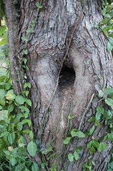 Free Odd Tree Royalty Free Stock Image - 21117276