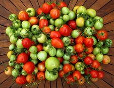 Free Tomato Royalty Free Stock Photo - 21117315