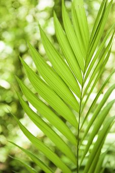 Free Palm Leaves *Soft Focus* Royalty Free Stock Photos - 21118188
