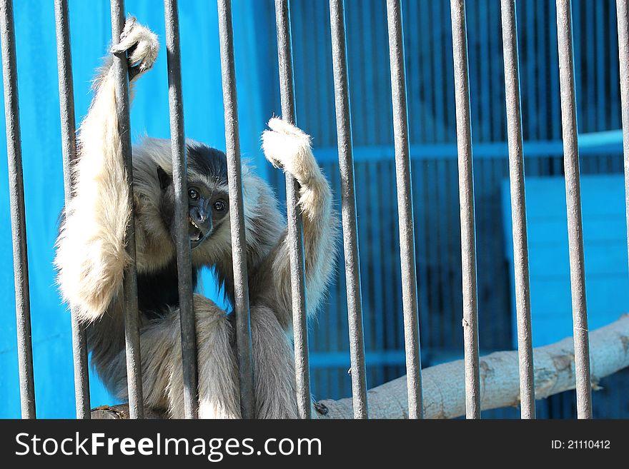 Sad monkey sit in cage