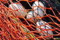 Free Close-up Of Fishing Net And Floats Background. Royalty Free Stock Photography - 21124117
