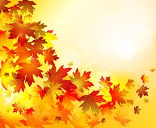 Free Autumn Leaves Background Stock Images - 21120674