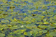 Free Lake Royalty Free Stock Image - 21120976