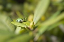 Free Frog On Leaf Royalty Free Stock Photography - 21121467