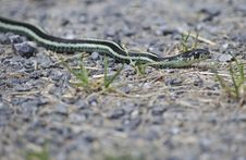 Free Snake In The Rocks Stock Photo - 21121790
