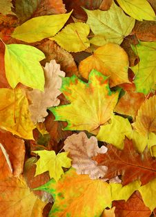 Free Autumn Leaves Stock Image - 21122281