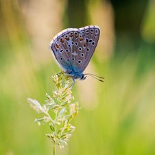Butterfly Sits On The Flowers Stock Image